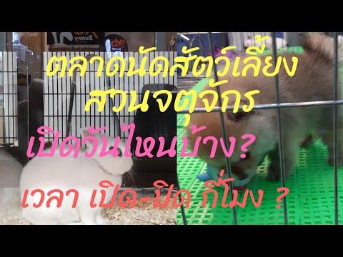 ตลาดนัดสัตว์เลี้ยงสวนจตุจักร เปิดวันไหนบ้าง เวลาเปิด-ปิดกี่โมง?